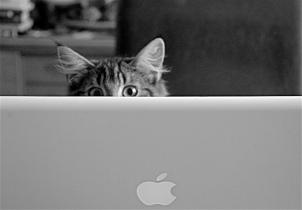 share online cat